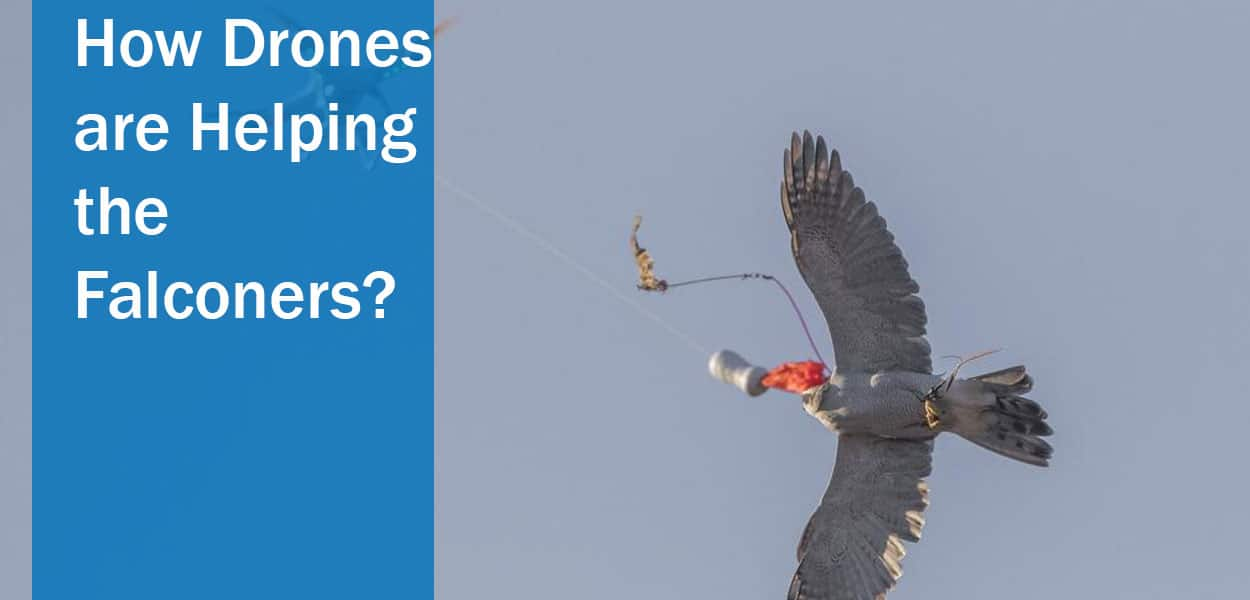 How-Drones-are-Helping-the-Falconers